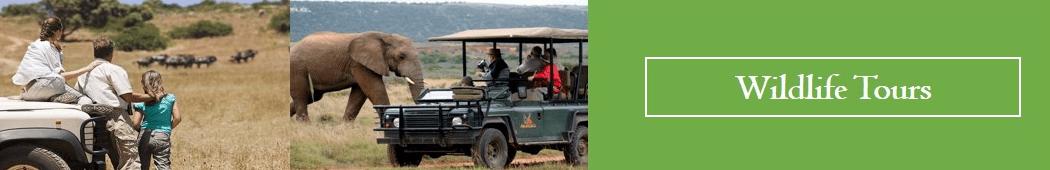 wildlife-tours